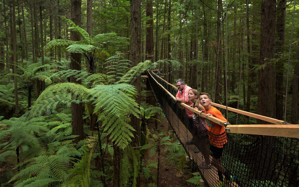 experience an award-winning tree walk in rotorua