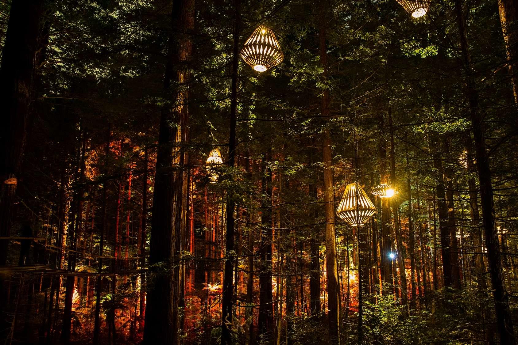 Redwoods Nightlights | Redwoods Treewalk Rotorua