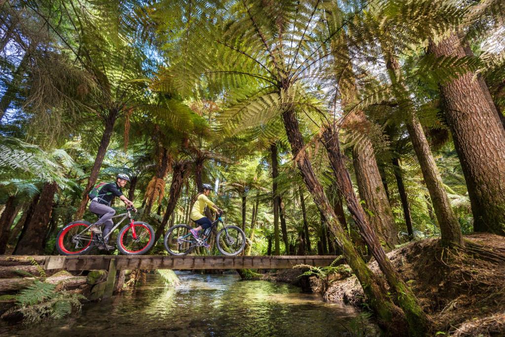 Explore Redwoods Whakarewarewa Forest